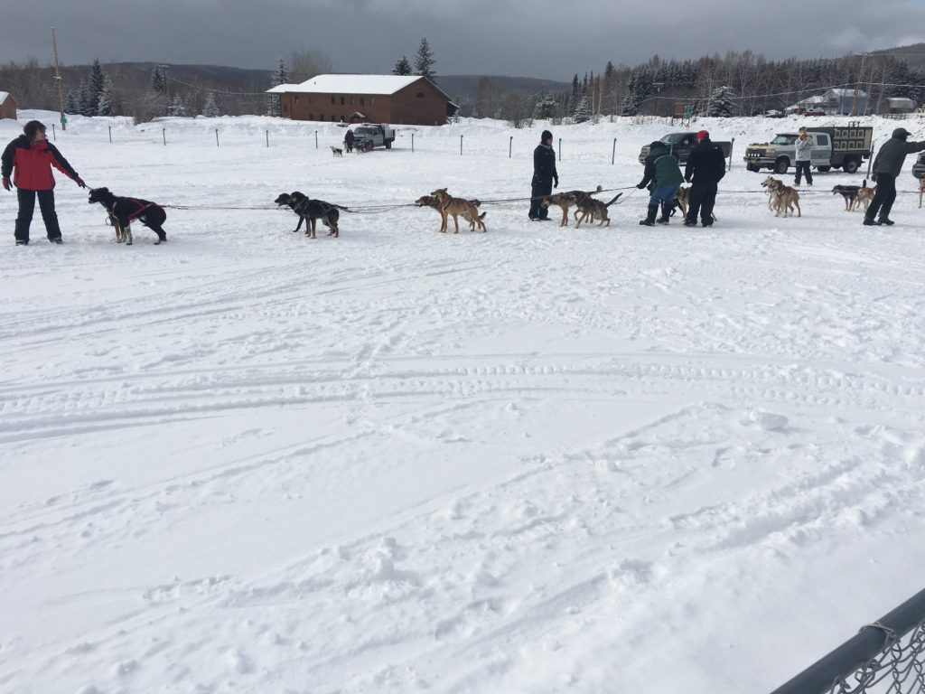 Dog Mushers getting ready for practice