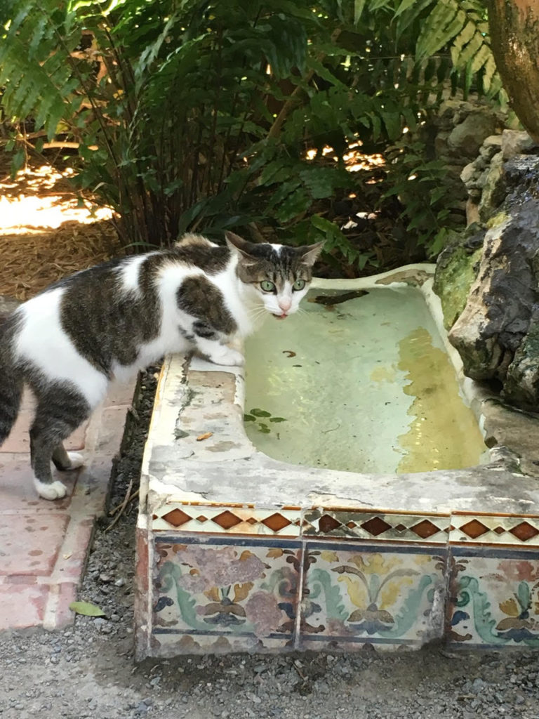 One of the many cats that live at the Ernest Hemingway Home.  Keep on the lookout for those with 6-toes!